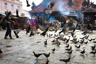 Pigeons taking to the air outside the Kuan Yin Teng temple in Penang. Photo: Alamy