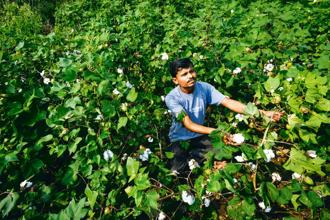 A cotton farmer from Kalamb in Maharashtra's Yavatmal district. At least 21 farmers from Yavatmal are among the 40 who died duringJuly-September due to pesticide poisoning. Photo: Aniruddha Chowdhury/Mint