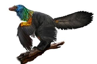 An illustration of a reconstruction of the iridescent dinosaur which had rainbow feathers, named Caihong juji, unearthed in China, is shown in this October 31, 2016 photo released on January 15, 2018. Courtesy Velizar Simeonovski/The Field Museum for the University of Texas at Austin/Handout via REUTERS