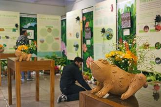 The FrogFest consists of over 500 artefacts. Photo courtesy  WWF India