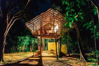 A tree house at Back of Beyond Jungle Hideaway. Photo courtesy Back of Beyond