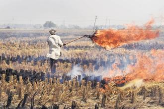Crop stubble burning caused one-quarter of the air pollution that blanketed Delhi in November. Photo: Hindustan Times