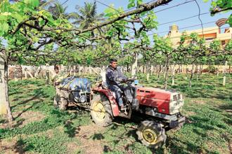 Due to repeated announcements of the government's intention to double farmer incomes by 2022, expectations have gone up everywhere. Photo: Hemant Mishra/Mint
