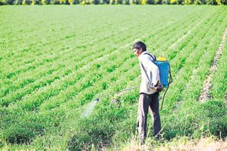 File photo. The centre released a draft of the pesticide management bill, intended to replace the existing Insecticides Act of 1968, on 19 February. Photo: Pradeep Gaur/Mint