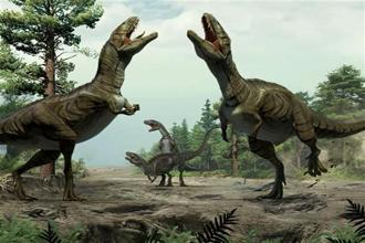 This illustration shows theropods engaged in scrape ceremony display activity, based on trace fossil evidence from Colorado. Experts who discovered the long grooves say they were dug by dinosaurs during a frenzied ritual to attract mates. Photo: AP