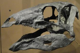 The fossil skull was unwittingly excavated at a site north of Arches National Park in eastern Utah. Photo: Wikimedia Commons