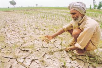 Representational image. A senior official from the Telangana agriculture marketing department, who did not want to be named, said that if there is no rainfall in the next four days or so, many farmers will lose their money. Photo: PTI