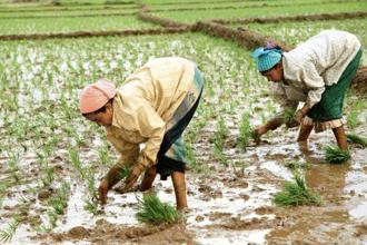 So far, about 11.6 million hectares have been planted with crops such as rice, pulses, oilseeds, cotton and sugarcane, according to data shared by the agriculture ministry. Photo: Bloomberg