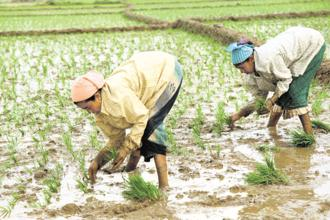 The central government has decided to fix MSPs at least 150% of the cost of production for all kharif crops for 2018-19. Photo: Bloomberg