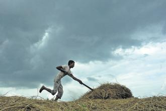 The monsoon is critical to agriculture in India, with about 700 million of the 1.3 billion population depending directly or indirectly on farming. Photo: AFP