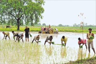 The average annual income of rural households was Rs 96,708. Photo: HT