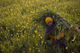 China imported Indian oilseeds worth $161 million in 2011. Photo: Bloomberg