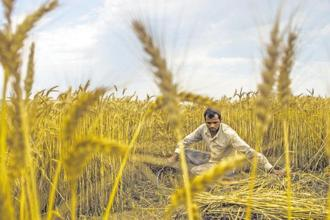 Farmer leaders say the new schemes launched by the government are yet to show results on ground. Photo: Bloomberg