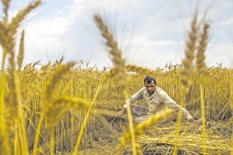 Since the first agriculture census over 45 years ago, the number of farms in India has more than doubled from 71 million in 1970-71 to 145 million in 2015-16. Photo: Bloomberg