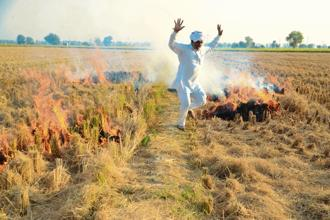 Every year, through October, thousands of farmers across Punjab, Haryana and Uttar Pradesh set fire to an estimated 23 million tonnes of paddy straw.  Photo:  Sayantan Bera/Mint