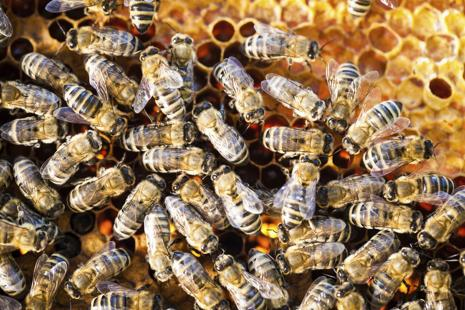 The epidemic has put at risk the bee population which plays a vital role in sustaining biodiversity and agricultural biosecurity.