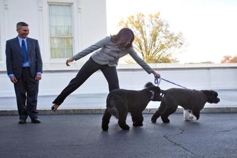 First lady Michelle Obama is pulled away by her dogs Bo and Sunny, after welcoming the Official White House Christmas Tree to the White House in Washington. Photo: Pablo Martinez Monsivais/AP