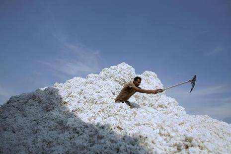 India's cotton output in 2016-17 could rise 3.8% from a year earlier to 35.1 million bales as yields are expected to increase due to good monsoon rains. Photo: Bloomberg