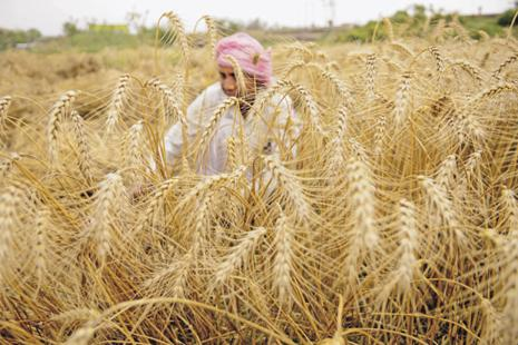 While high levels of household debts have been recognized as a significant cause of farmers' distress, the use of unconditional debt relief to improve living conditions, crop productivity and to reduce suicides is controversial. Photo: Burhaan Kinu/HT