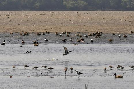 A file photo. Environment panel approves petro-chemical investment region in Bharuch despite concerns regarding the impact on the erosion-prone coastal area and migratory birds. Photo: Hindustan Times