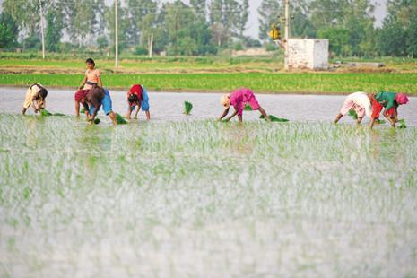 Last month finance minister Arun Jaitley has ruled out taxing farmers, telling parliament 'Income from agriculture will not be taxed.'  Photo: Pradeep Gaur/ Mint