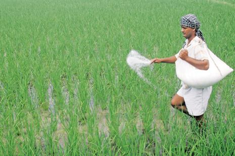 Higher tax rate on fertilizers under the GST regime will increase retail prices of commonly used fertilizers and micronutrients, which is turn will raise cost of cultivation and lead to imbalanced use of fertilizers. Photo: Reuters