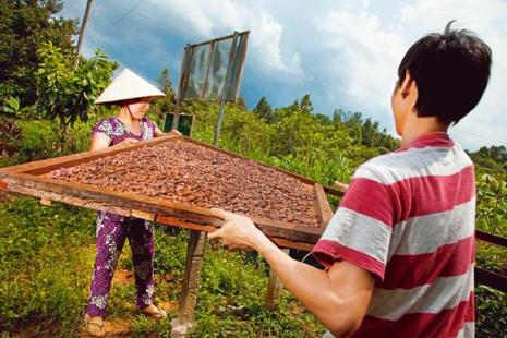 A cacao farm. Photos: Courtesy Marou Chocolates.