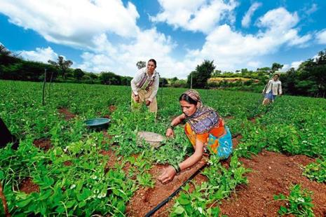 Between 2001-02 and 2016-17, horticulture production doubled from 146 million tonnes to 295mt, while foodgrain rose from 213mt to 273mt. Photo: Mint