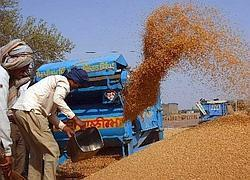 Bumper crop: According to the agriculture ministry, India is likely to produce 74.89mt of wheat in 2007, up from 69.48mt last year.