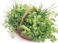 Green fingers: A basket of parsley, basil, lemon balm and chives.