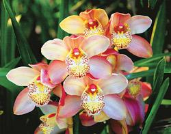 Orchids thrive in the humidity of Mumbai