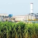 Hit hard: The sugar manufacturing facility of Bajaj Hindusthan Ltd in Bhilai. The losses incurred by manufacturers trickled down to sugar cane farmers, who were not paid by the millers.