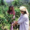 Tapping plantations: Workers at a coffee plantation in Vythiri, Kerala. Upasi tea committee chairperson Peter Mathais says coffee plantations in neighbouring Karnataka are promoting tourism in a big w