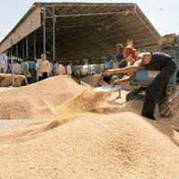 Greater participation: The enhanced holding limits may help India's exchanges boost trade in farm commodities after a ban on wheat and lentil trading and curbs on the size of investors' bets stalled g