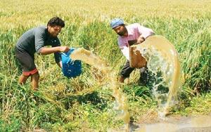 Digging deep: A file photo of farmers draining water from their field in Amritsar. Punjab's water table has fallen rapidly, leading to rising costs amid the need to dig ever deeper wells.