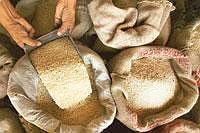 Losing out: Higher prices and export duties will hurt the advantage that India enjoys in the basmati market, say rice exporters