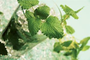 Sweet sour: Mix sugar, mint and lime juice for the perfect mojito.