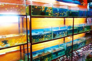 Showing potential: India is eyeing a 10% share of the global ornamental fish market by 2015. Currently, global trade in such fish is at $22 billion. Ajayan / Mint