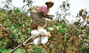 Unresolved issue: In September, the government had raised the MSP for cotton by 46%. Aijaz Rahi / AP