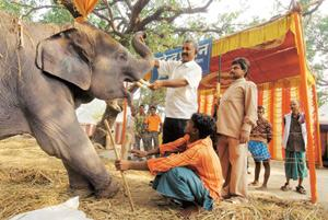 Elephantine issue: Owner Mahendra Prasad with his elephant, mahout and a gunman at the fair in Bihar. Indranil Bhoumik / Mint