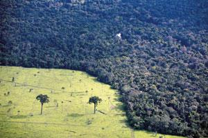 For the greater good: A devastated area of forest used for cattle in Alta Floresta, Brazil. The country plans to reduce deforestation next year by 20%, to less than 4,000 sq. miles (around 10 360 sq.