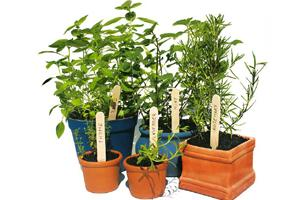 Tough cookies: Herbs thrive in harsh growing conditions.