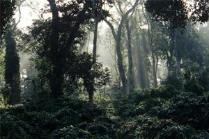 Closer home: Tiger Hills by Mandanna recreates life in the coffee plantations of Coorg. India Picture