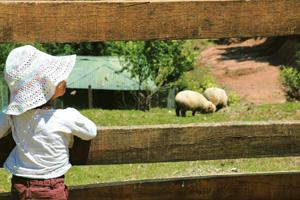 Eye-opener: Seeing farm animals at close quarters can be an exciting experience for your child. Praveen Manivannan