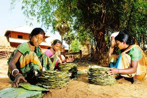 Simple needs: Tribals Panmani Murmu, Sombari Murmu and Kalpana Hasda sort sal leaves in Chotopelia village, Lalgarh. Imposition of restrictions by the administration on exploitation of forest resource