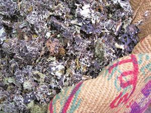 Enhancer: Lichen or kalpasi adds that elusive edge to spice mixes