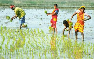 Agrarian economy: Agriculture and irrigation are unlikely to get any major funding increases despite concerns about a deficient monsoon. Indranil Bhoumik / Mint