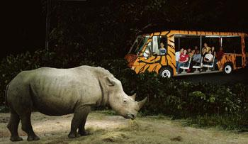 Alternate reality: In Singapore, the play-acting doesn't spare even a rhino. Salil Tripathi