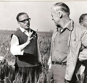 Two pioneers: M.S. Swaminathan (left) and Norman Borlaug in the fields at the Indian Agricultural Research Institute in 1965. MS Swaminathan Research Foundation