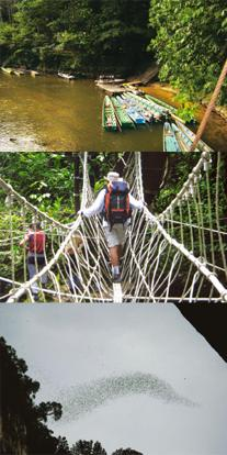 Lord of the trail: (from top) Traversing the Gunung Mulu National Park in Sarawak involves braving rivers full of snakes; shaky rope bridges;; and a squadron of bats swarms out of Sarawak's Deer Cave.